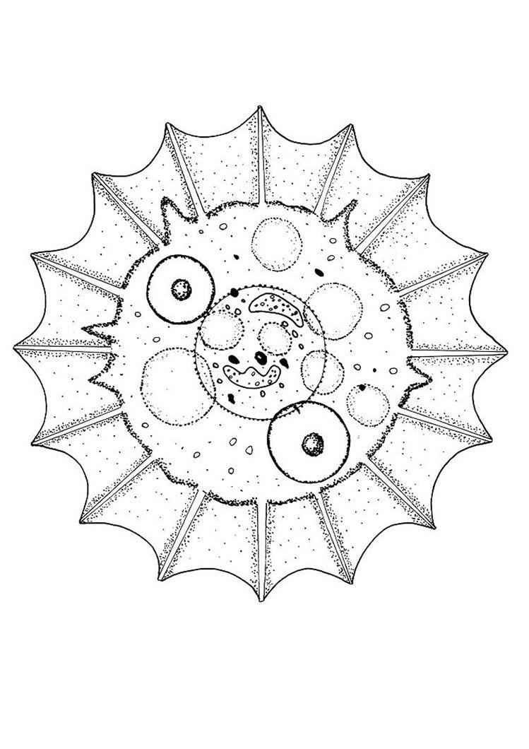 Pretty shell mandala coloring page An original and free coloring