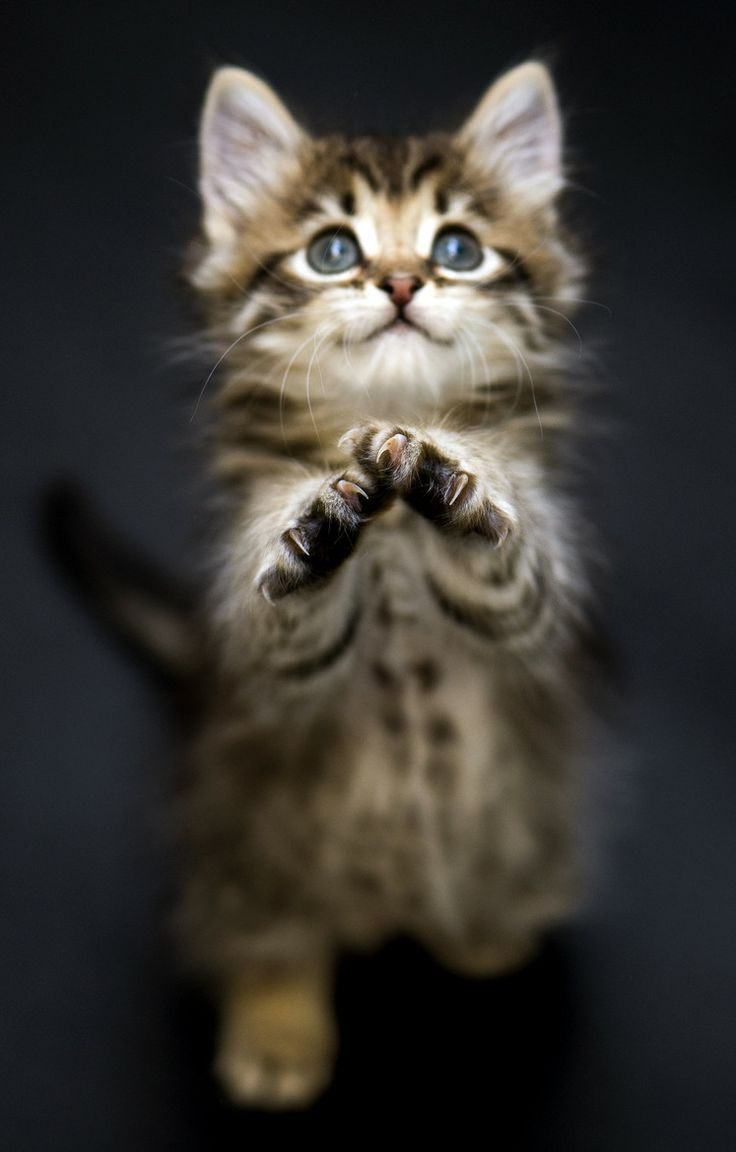 Top Unusual Cat Breeds On Earth. Cat, Animal and Kitty