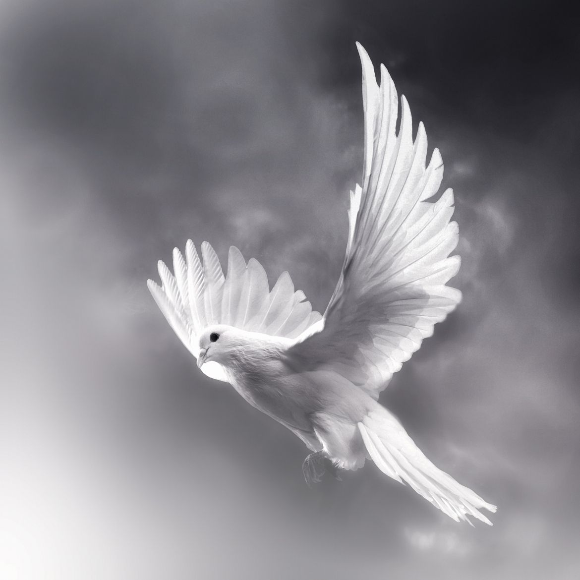 Pure Soul Pic Pinterest: Photograph Pure Soul By Josep Sumalla On 500px