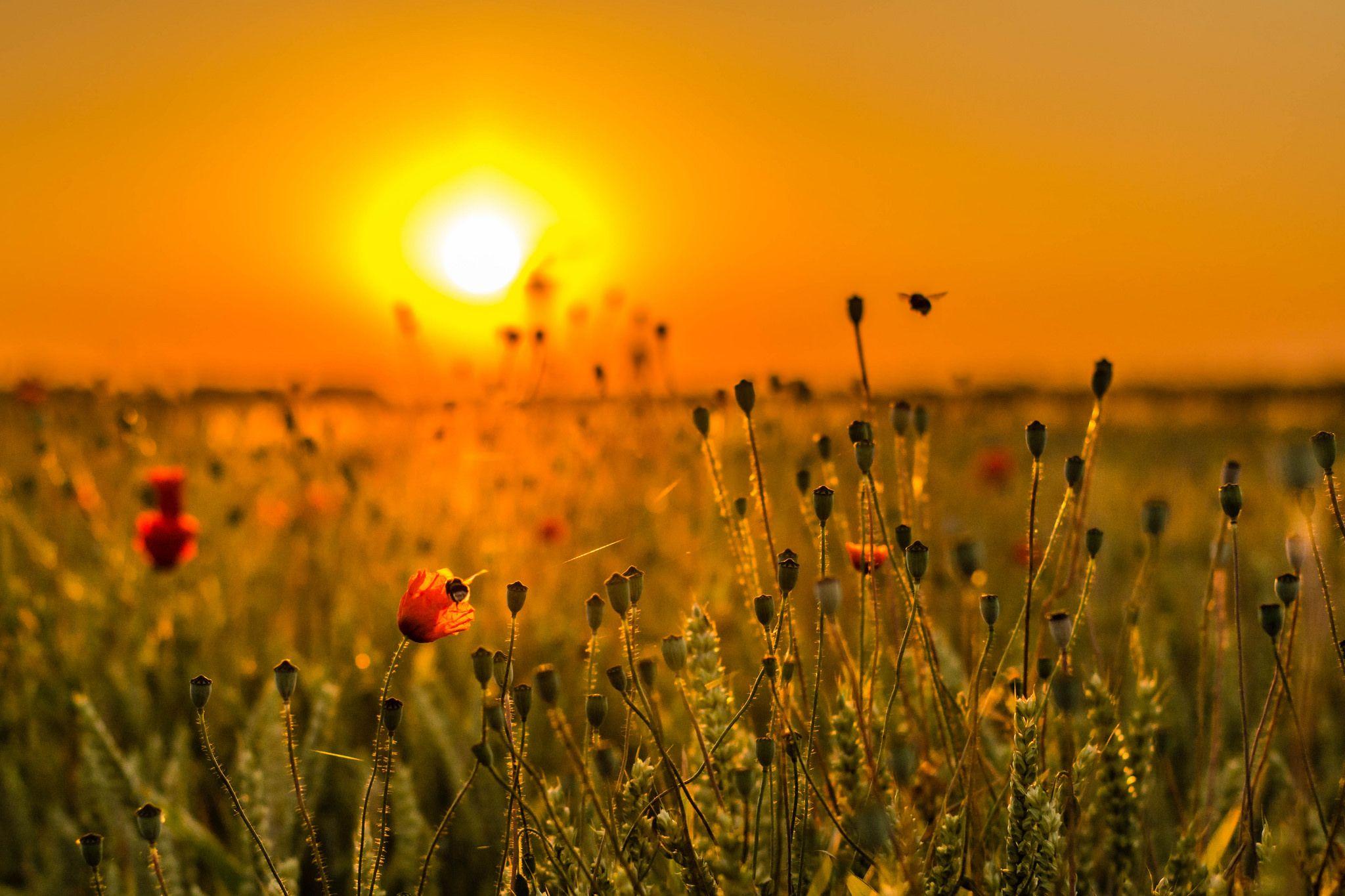 https://flic.kr/p/vGtU6J | morning light | Explore 9.7.2015  Vielen lieben Dank an Euch, für Explore und für die netten Kommentare!