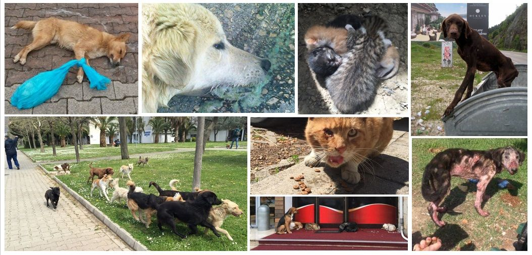18+ Stray network animal rescue ideas in 2021