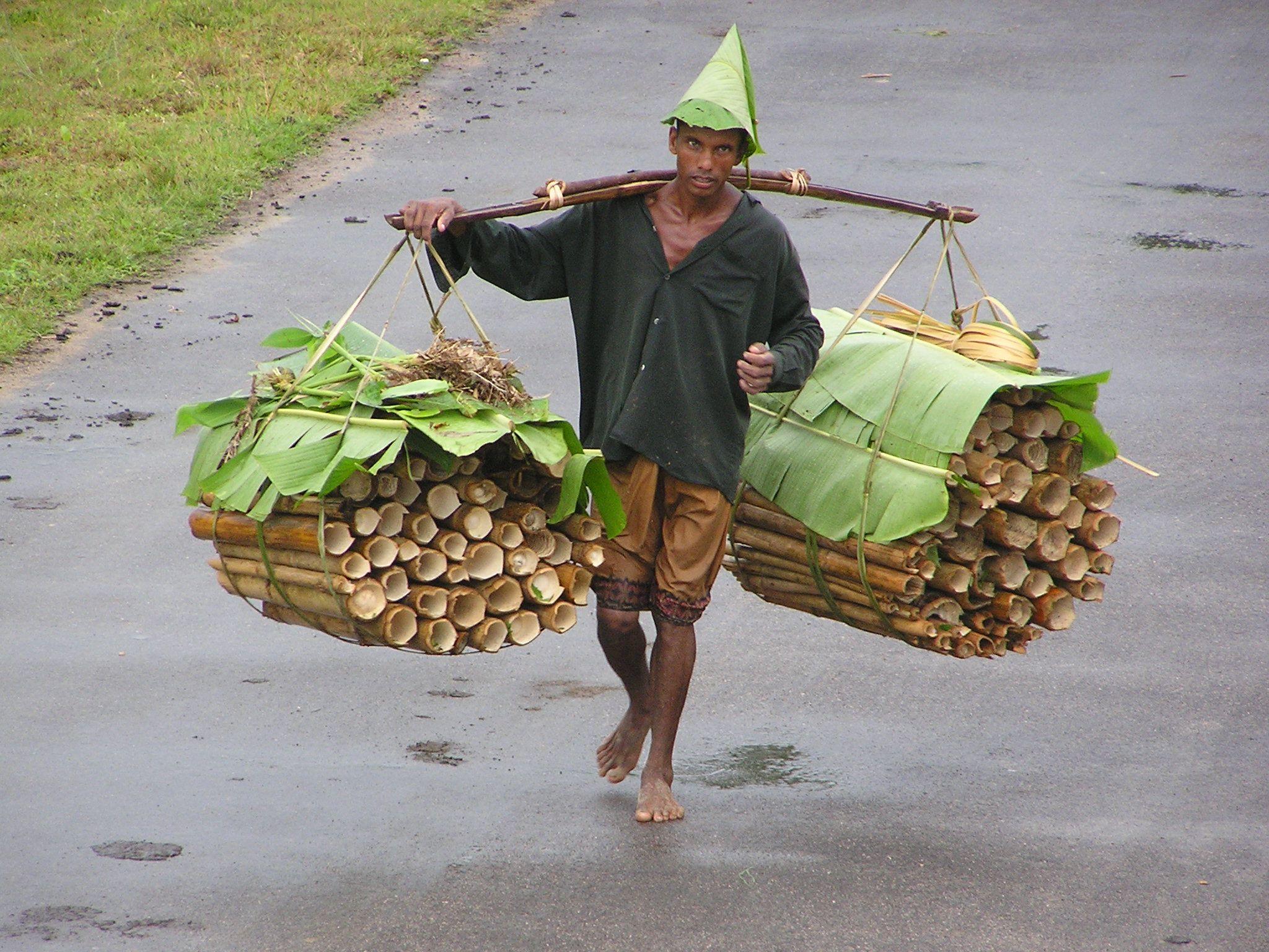 Bangladeshi bamboo forest worker  Photo by Melanie Pratt