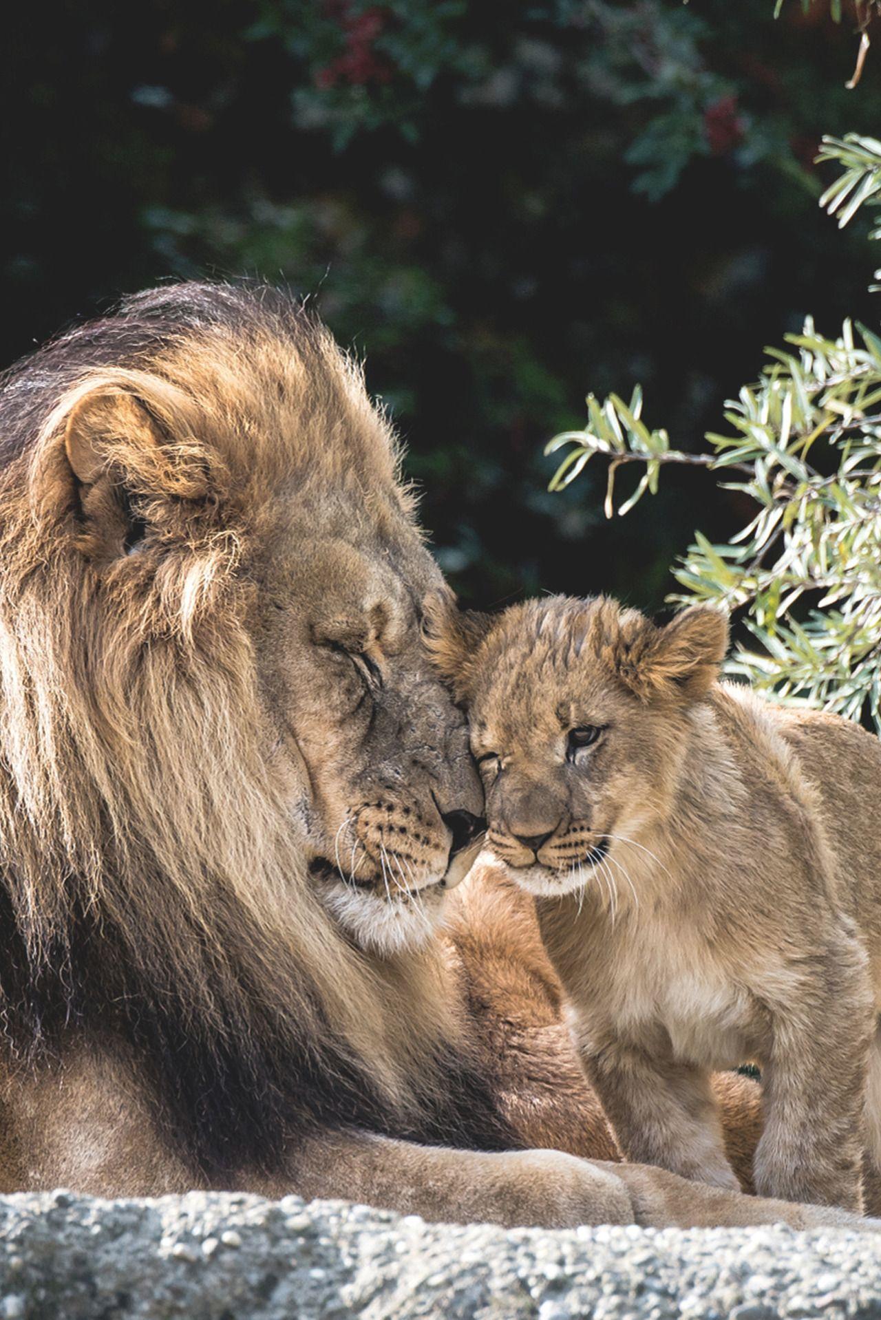 New post on biodiversity Animals, Animals beautiful