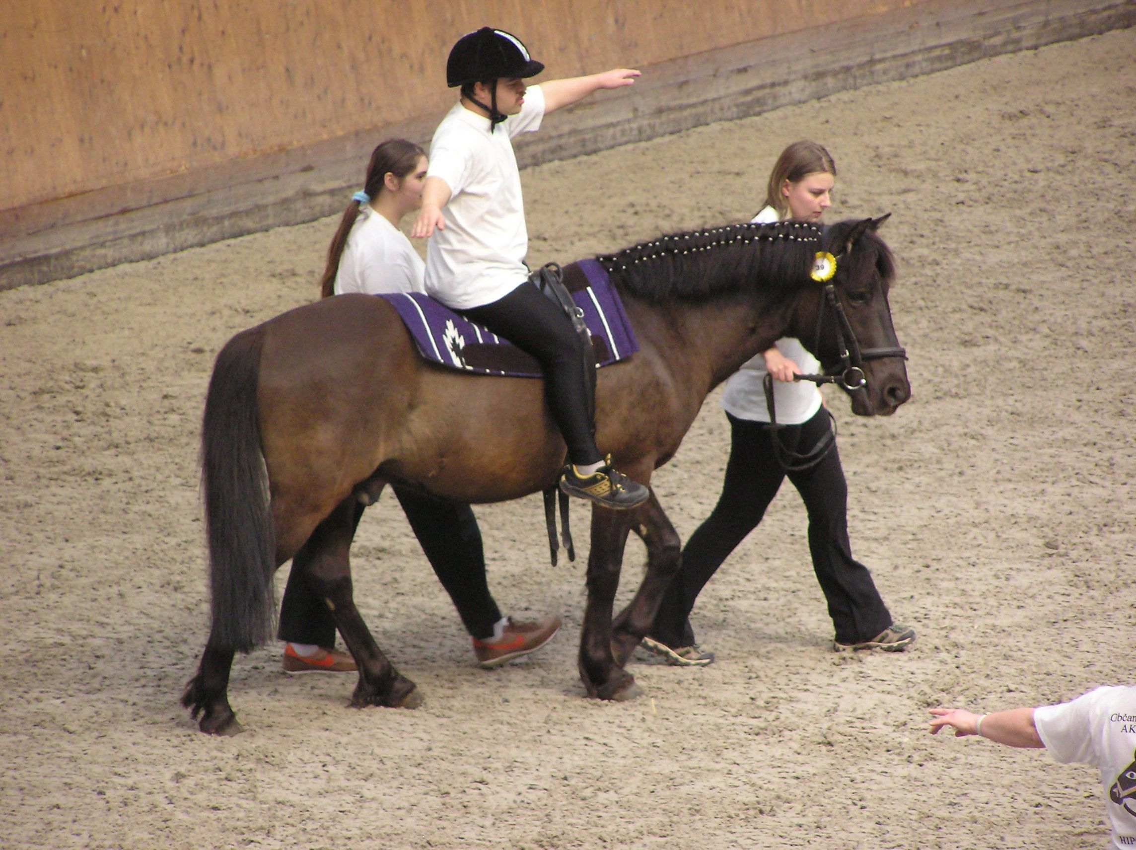 Equine physical therapy - Therapeutic Horseback Riding