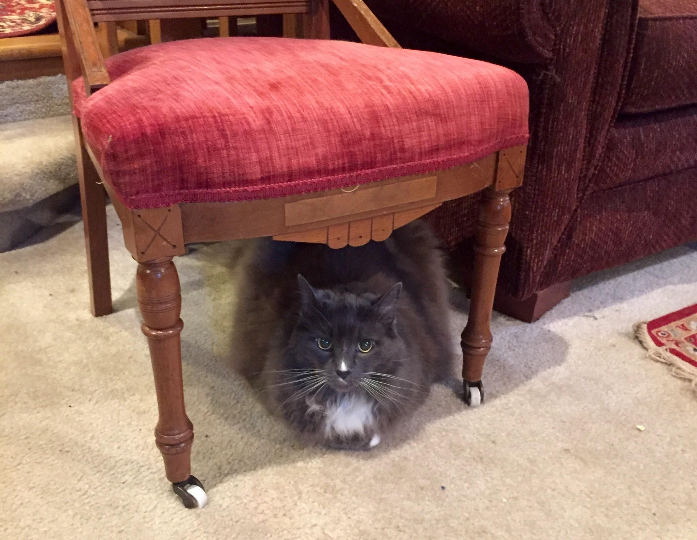 Fluffy Catloaf Under Protective Chair CatLoaf Pinterest