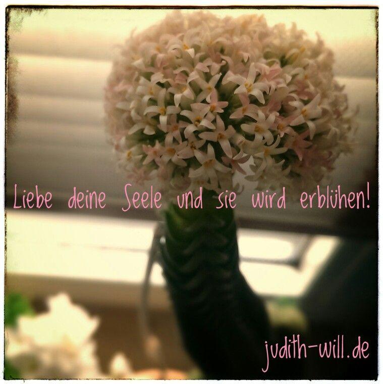 Liebe deine Seele und sie wird erblühen! judith-will.de #Willensforschung #erweckedeinpotential #Liebe #Seele #Herz #Freiheit