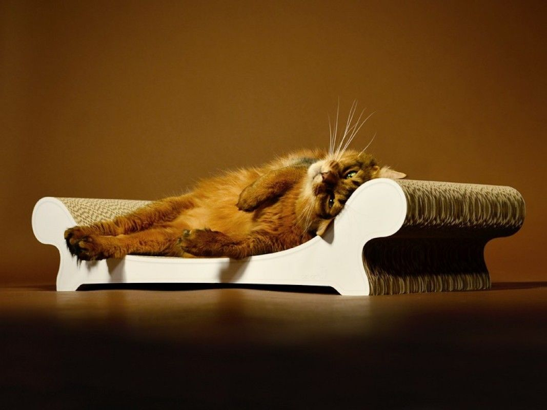 Griffoir Chat Carton Design griffoir pour chat en carton - le canape - dog&cat design