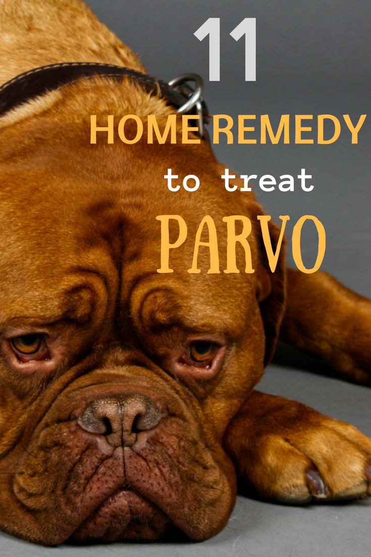 Help your Dog Get Rid of PARVO 11 Home Remedies that