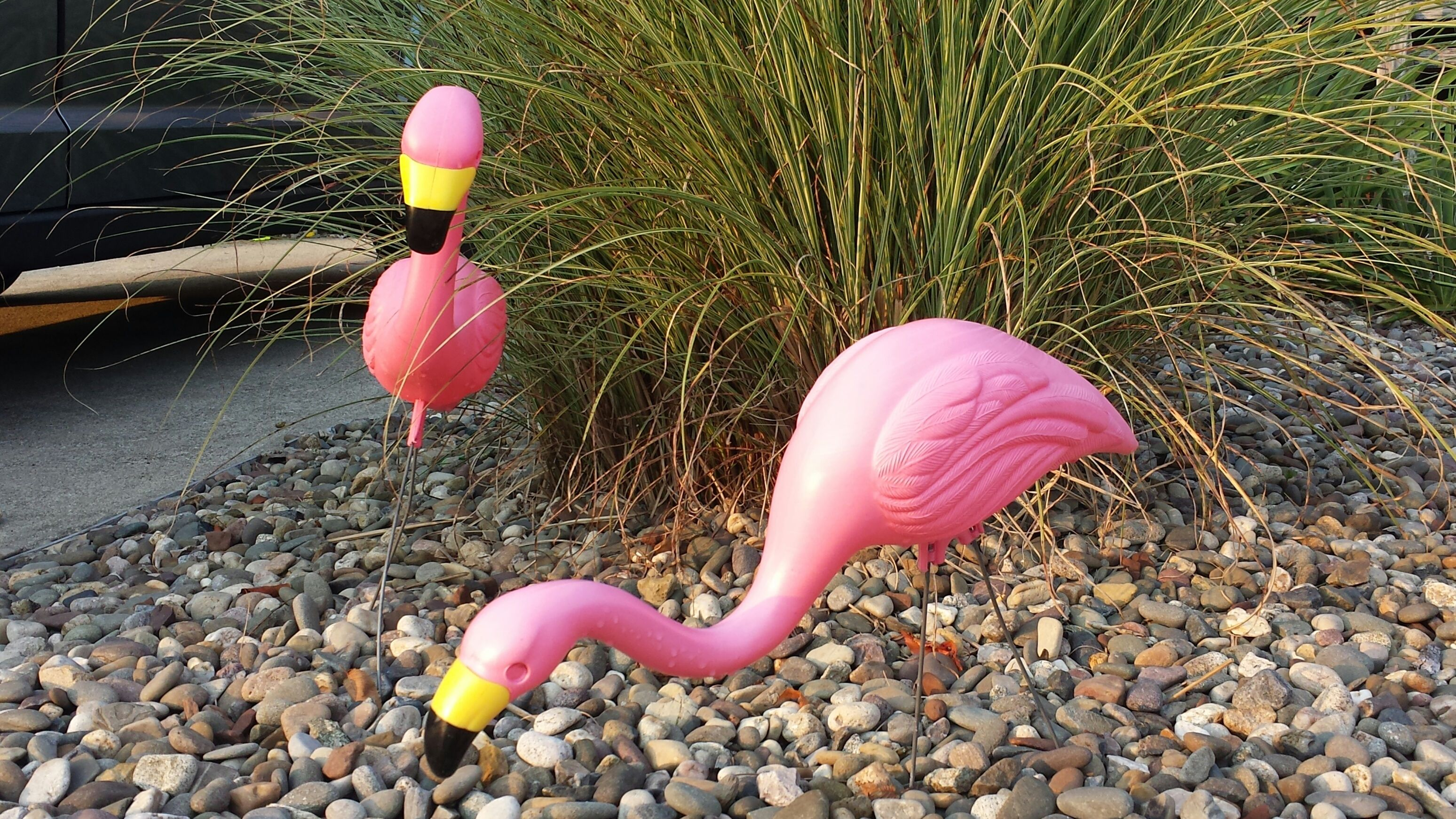 pink+flamingo+lawn+ornaments | pink flamingo lawn ornaments