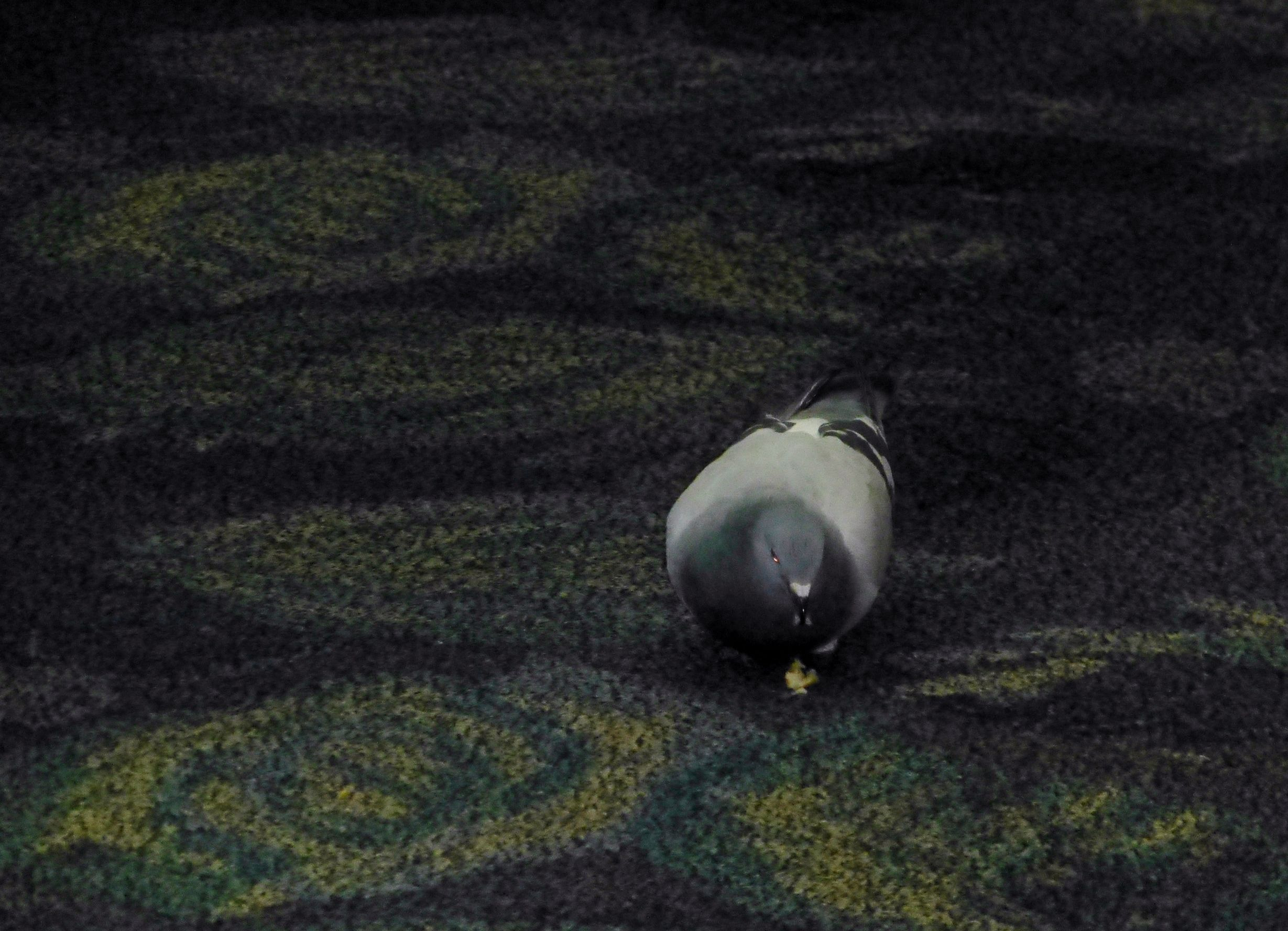 feeding pigeons inside Orlando airport