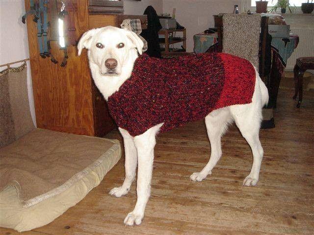 Hundepullover für Dogge, Ridgeback Viszla | Hundepullover ...