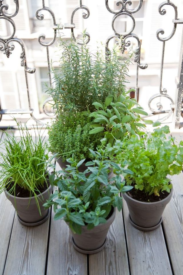 comment planter des plantes aromatiques sur son balcon jardin balcony herb gardens garden. Black Bedroom Furniture Sets. Home Design Ideas