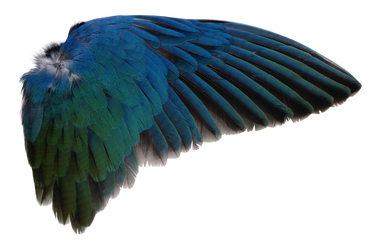 Wings 4 Png By Evelivesey D5i2e51 Png 900 695 Wings Png Angel Wings Png Bird
