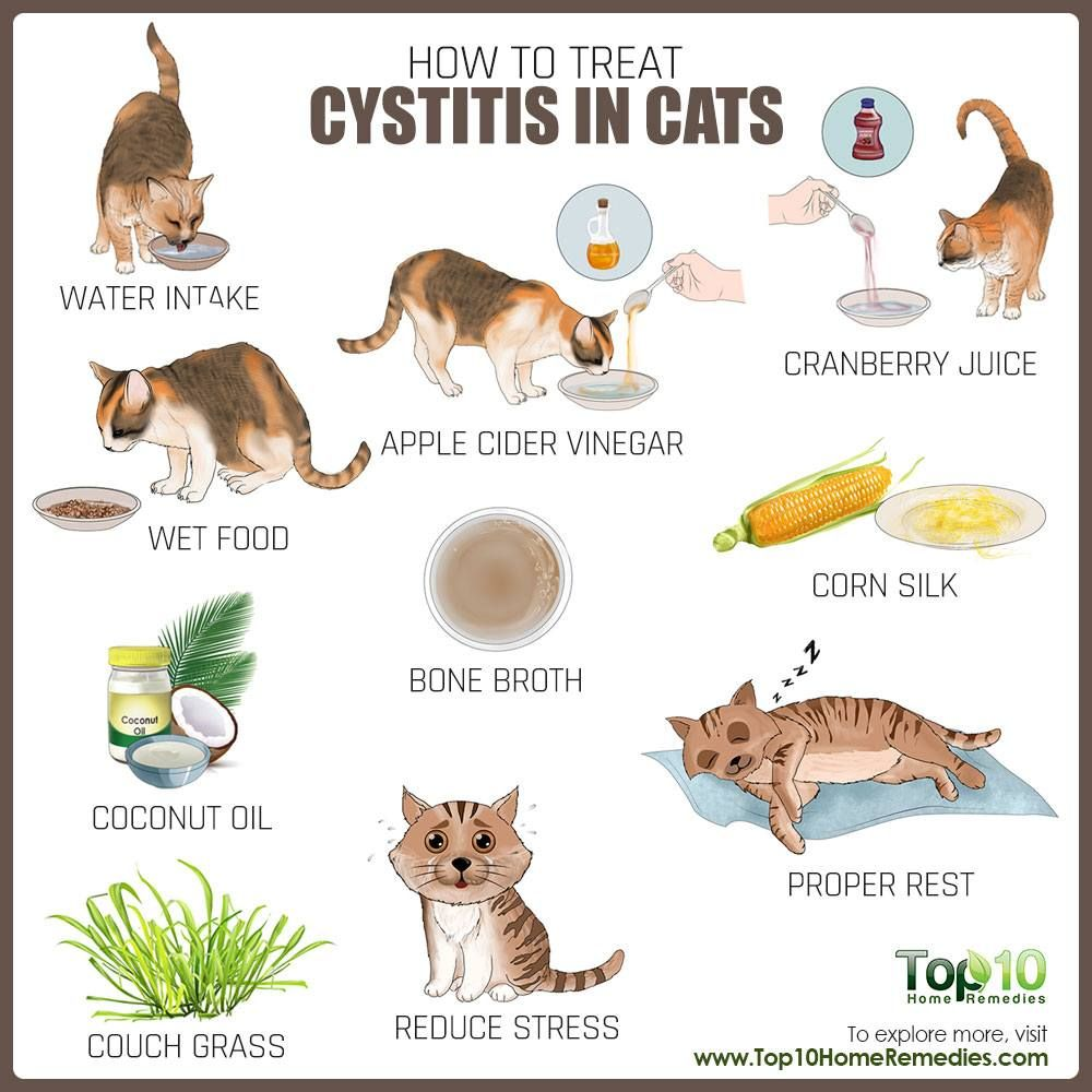 How To Treat Cystitis In Cats Top 10 Home Remedies In 2020 Cat Uti Cat Care Cystitis
