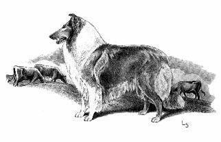SCHIPPERKE VINTAGE DOG PRINT SKETCH PAGE ARTIST BRIDGET OLERENSHAW