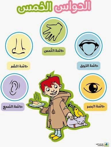 الحواس الخمس تعليم الأطفال الحواس الخمس حاسة الشم حاسة الذوق حاسة اللمس حاسة السمع حاسة البصر Learning Arabic Arabic Kids Learn Arabic Alphabet