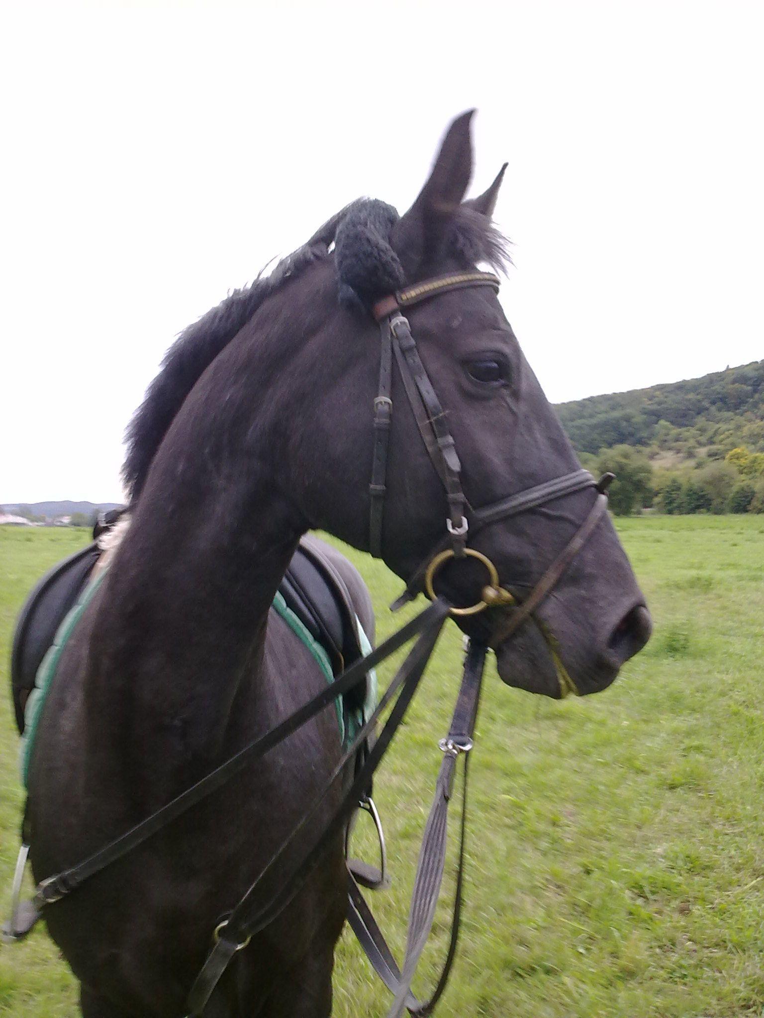 Lilly Vom Sonnenhof Bayerisches Warmblut Geboren Am 21 April 2002 Horses Animals Stuff To Buy
