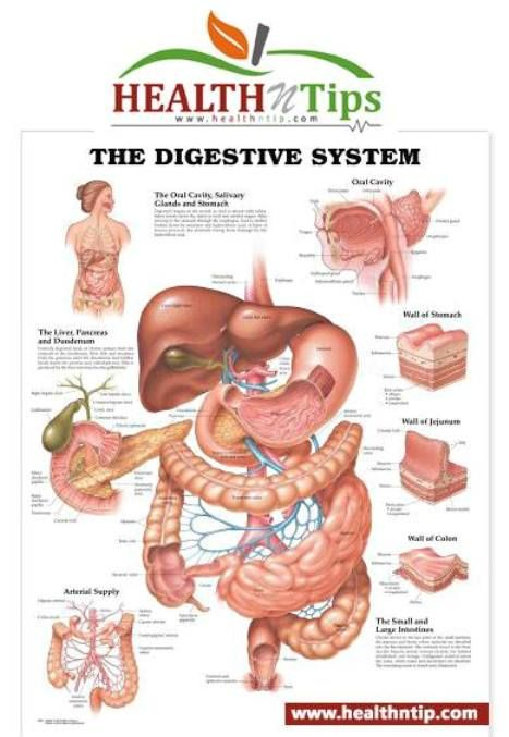 Common Digestion Problems And Treatment Digestive