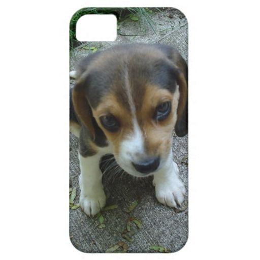 Pin By Doggie Checks On Beagle Cute Beagles Beagle Puppy