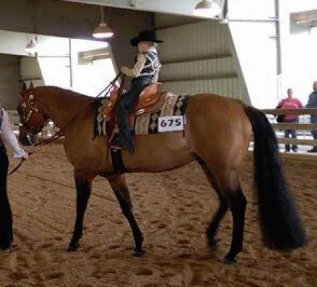 Pin by MyHorseForSale com on Horses For Sale | Horses