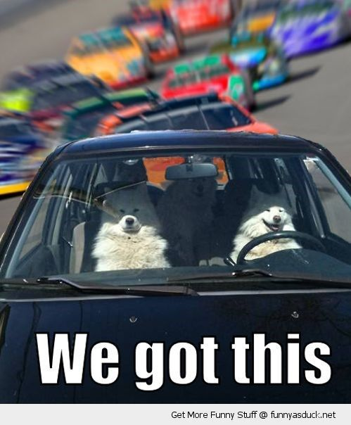 Dog Driving Meme : driving, Funny, Memes, Cats,, Moving, Vehicles, Animals,, Animal, Pictures,, Pictures