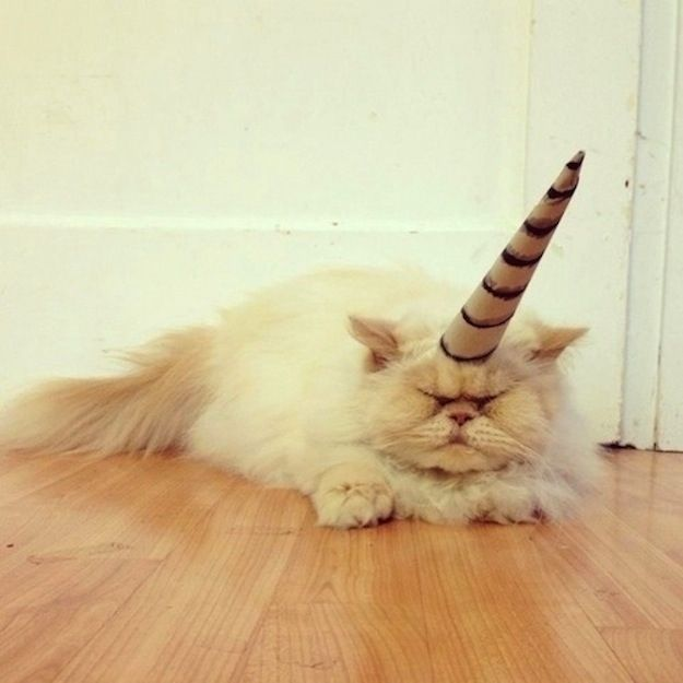 Things Cats Are Not Cat Unicorns And Animal - 26 funniest wet cats pictures