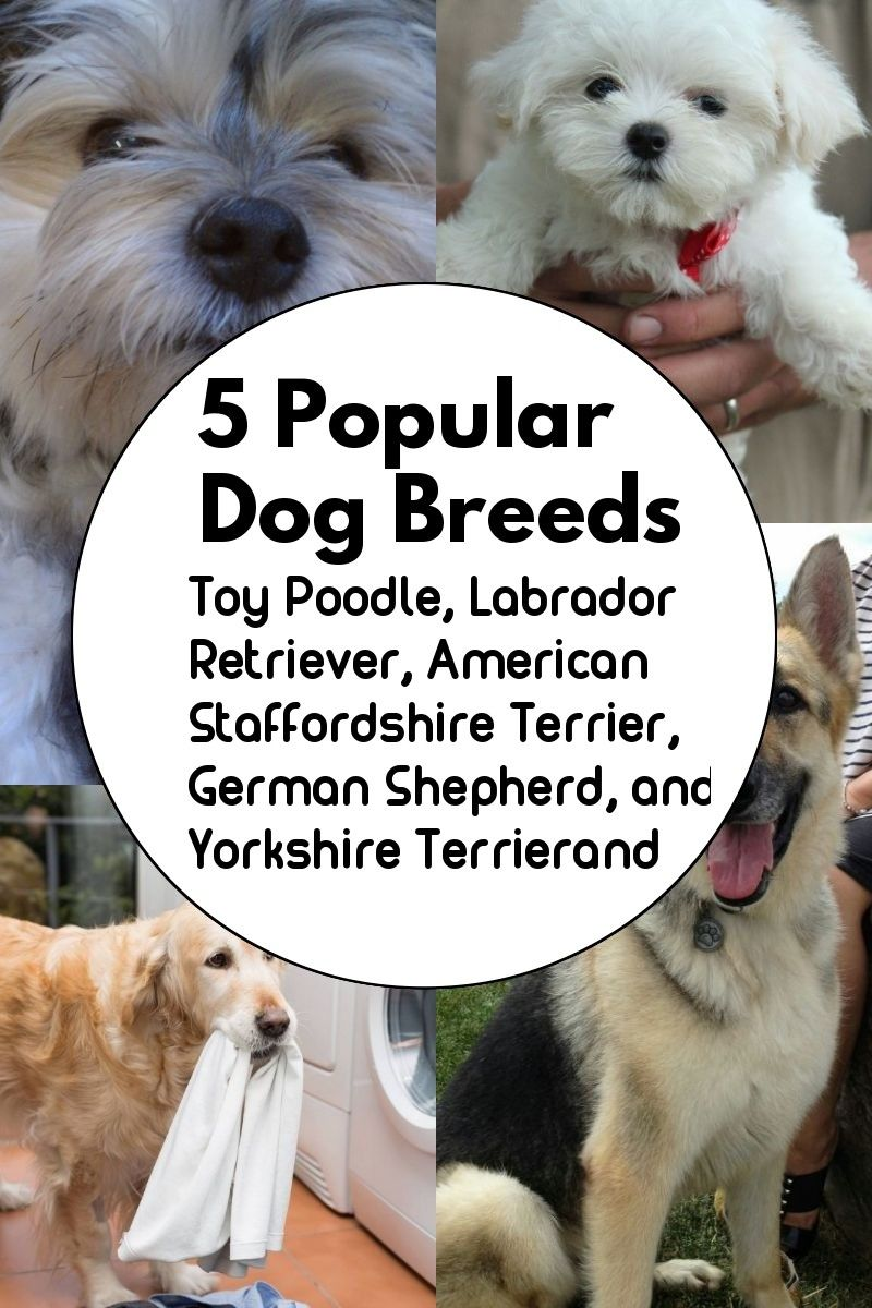 5 Dog Breeds That Are Widely Renowned Around The Globe