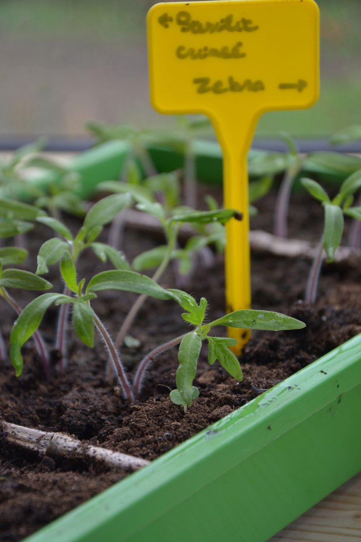 Bonjour à tous,  La fin mars/début avril chez nous correspond généralement aux premières pousses de printemps, et à la période des tous premiers semis en vue du potager ouLire la suite