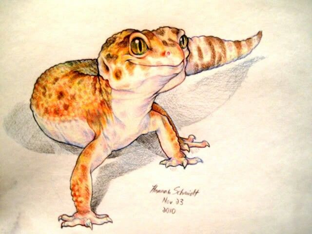 drawing by Hannah. | Leopard Gecko | Pinterest | Lagartos ...