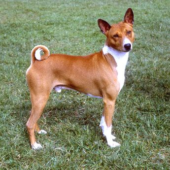 Pin on Animals Domestic Dogs