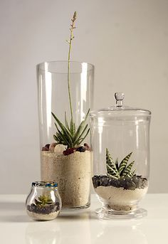Sand With Rocks On Top For Tall Vase Succulent Terrarium Plants