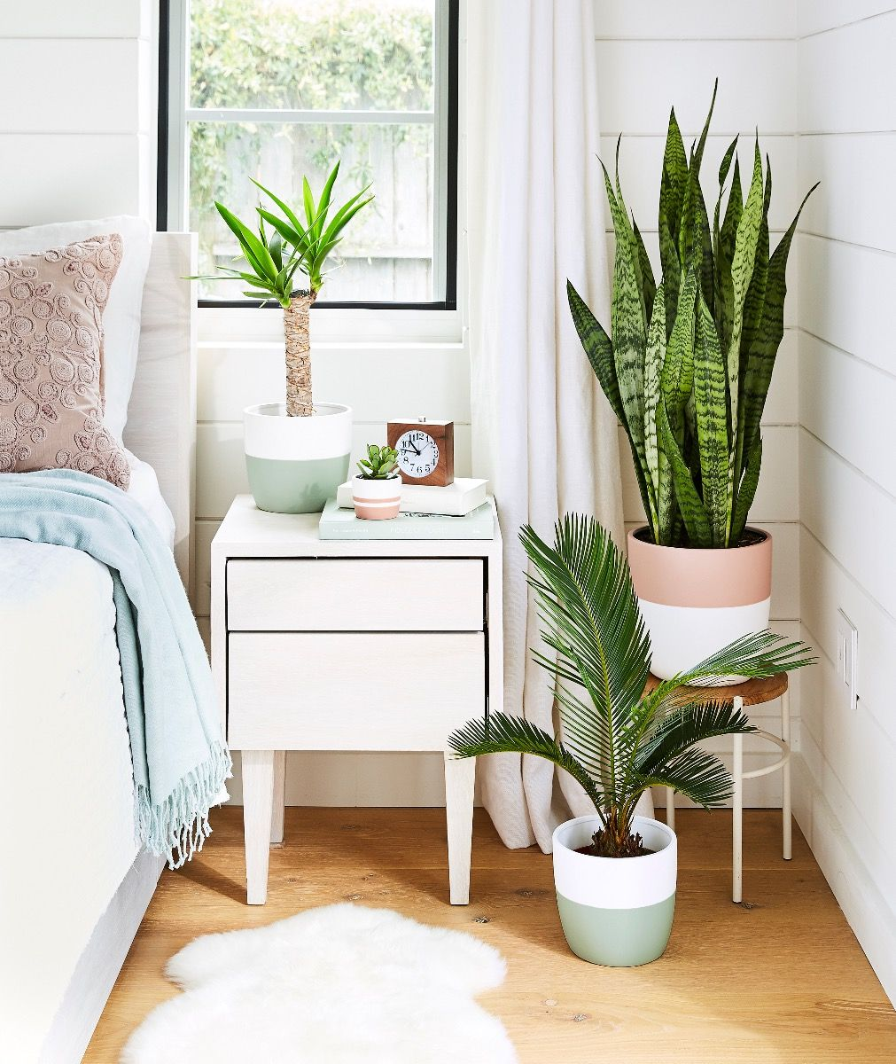tropical vibes bedroom + indoor plants Ansel & Ivy