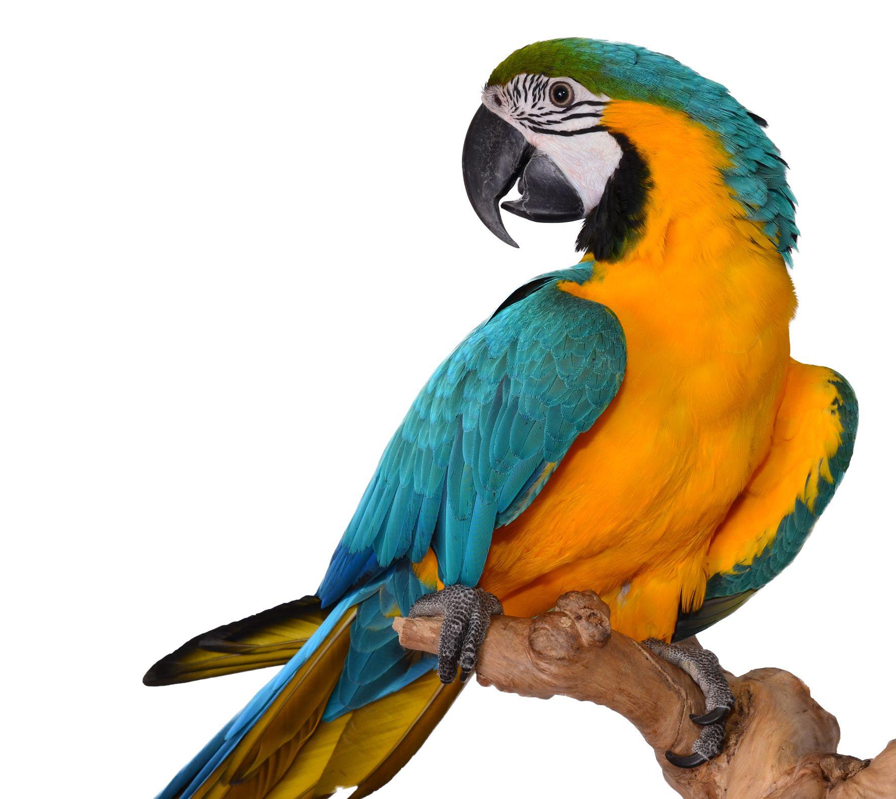 parrot Google Search Silly Animals Pinterest Bird