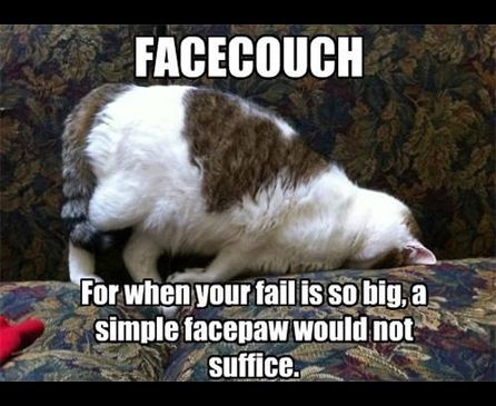 Not Funny Cat Meme : Facecouch for when your fail is so big a simple facepaw would not