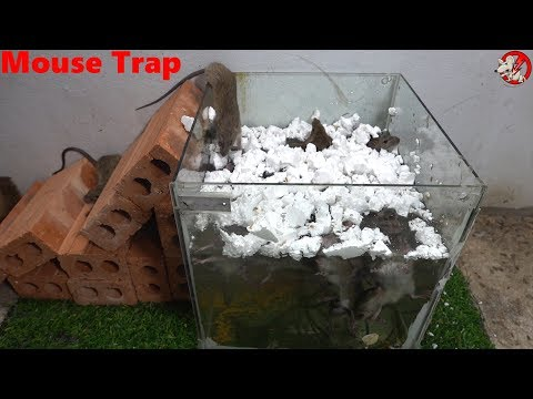 (112) Mouse Trap Handmade with Glass Water/Automatic saving a lot of Rat/Electric Trap - YouTube #mousetrap