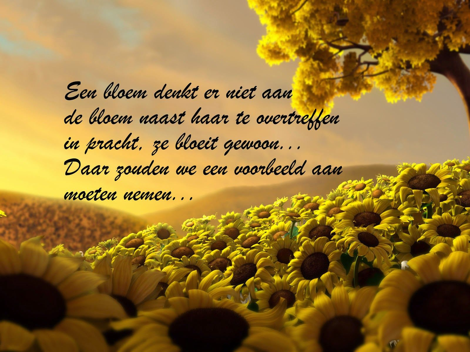 Citaten Over De Dood : Citaten en wijze woorden uit de islam nederlandse quotes