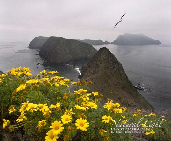 Join us on our next trip to Anacapa Island.  It's an amazingly beautiful place to visit and photograph.  www.hollysphotographyexplorations.com