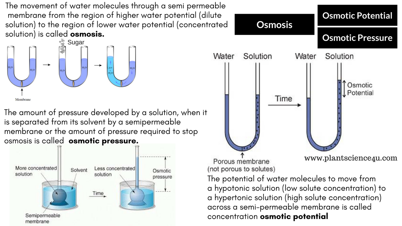 Osmotic Pressure And Osmotic Potential Osmotic Pressure Pressure Plant Science