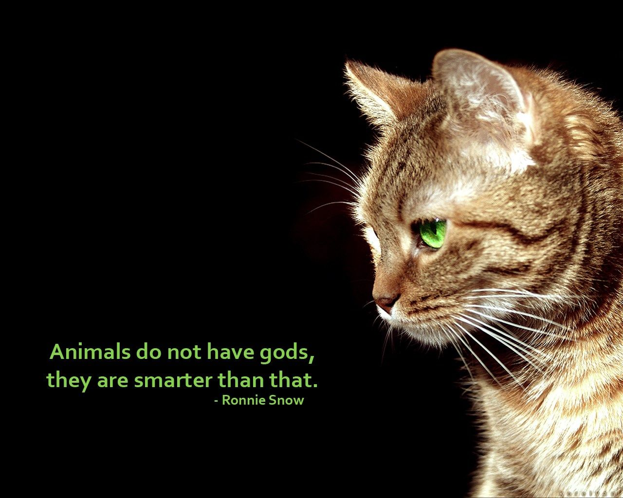Animal Rights Quotes 20170326  Backgrounds High Resolution Anti Religious Pic