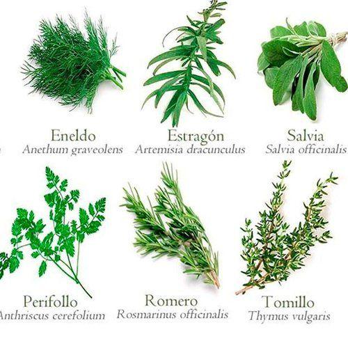 Plantas arom ticas y medicinales hierbas pinterest for Planta decorativa con propiedades medicinales