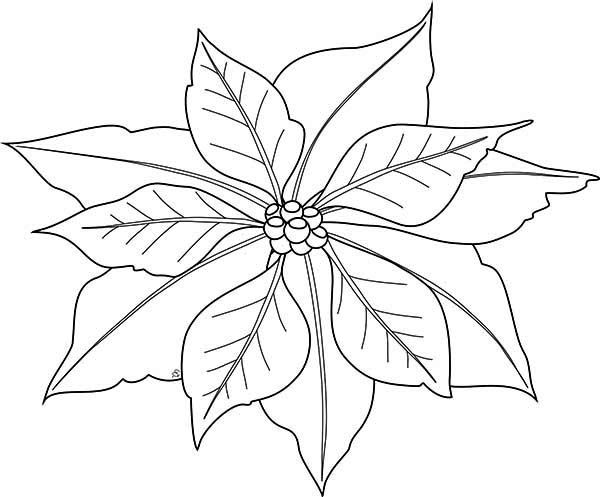 Poinsettia Outline Coloring Home Christmas Tree Sketch