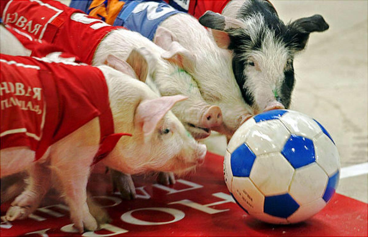 Playing soccers Animal intelligence, Animals, Cute animals