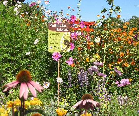 Pollinator Garden New England Google Search Native
