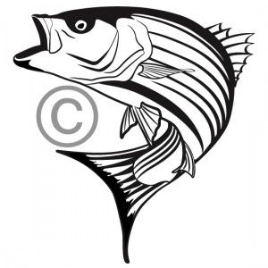 one color custom vector illustration of a striped bass great for rh pinterest com Bass Fish Drawings Bass Fish Jumping Clip Art