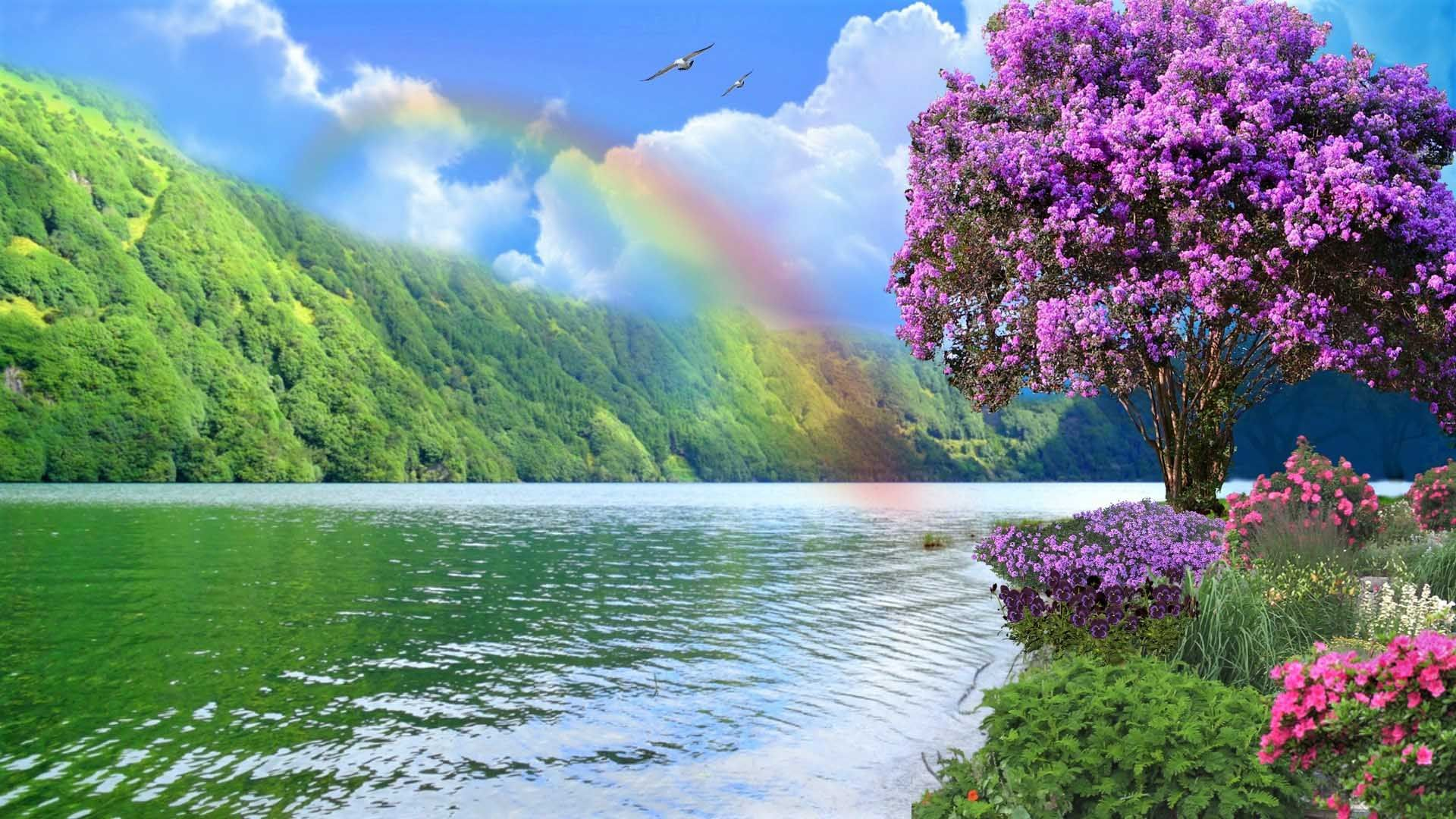 Rainbow Rainbow Photography Flowers Nature Rainbow Wallpaper