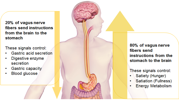 19+ Where is your vagus nerve located ideas in 2021