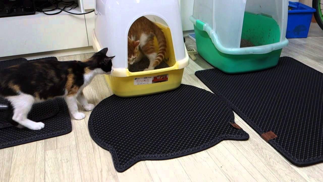 Pequenos detalhes que transformam o ambiente para seu gato gatos