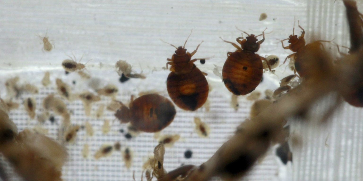 Here's what to do when you find out you have bedbugs Bed
