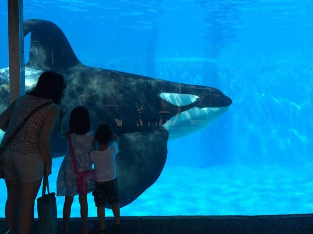 Is Seaworld Good Or Bad In 2020 Sea World Animals Orca