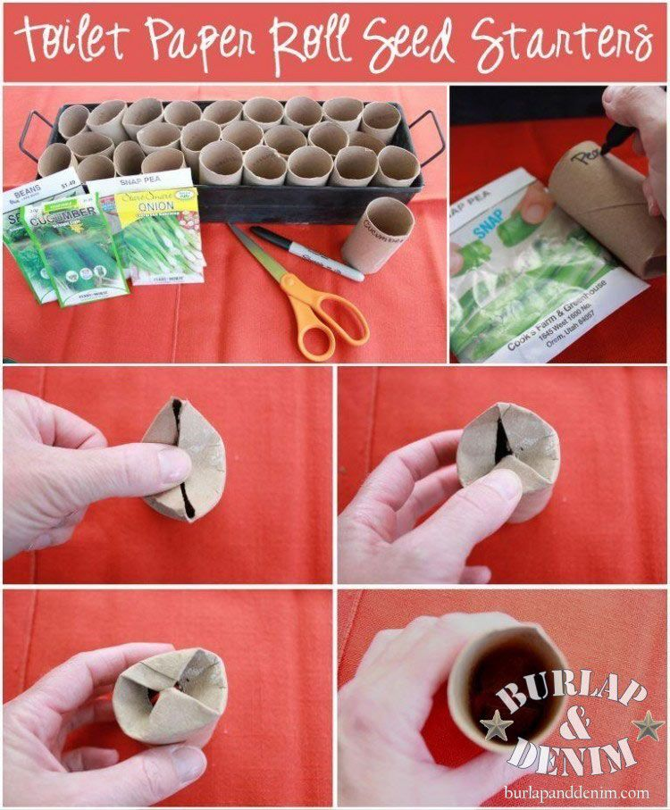 how to use toilet paper rolls as seed starters